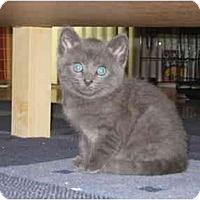 Adopt A Pet :: Tuffy - Davis, CA
