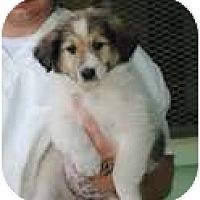 Adopt A Pet :: Aubrey - New Boston, NH