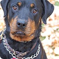 Adopt A Pet :: PJ - Altadena, CA