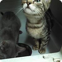 Adopt A Pet :: Louise - Willington, CT