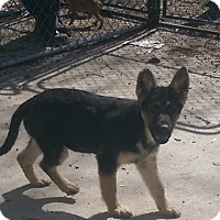 Adopt A Pet :: Raanta - ADOPTION PENDING!! - Antioch, IL