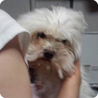 Adopt A Pet :: Nash - Lorain, OH