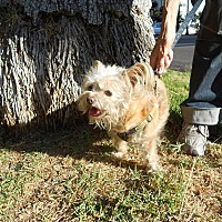 Adopt A Pet :: Woody - Courtesy Post - Encino, CA