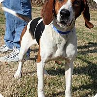 Adopt A Pet :: Lula - Erwin, TN