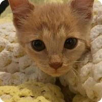 Adopt A Pet :: Aster - Reston, VA