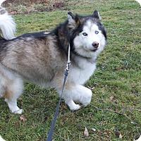 Adopt A Pet :: Mishka - Augusta County, VA
