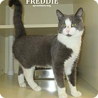 Adopt A Pet :: Freddie - Elizabeth City, NC
