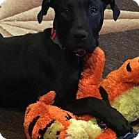 Adopt A Pet :: REMI - McKinney, TX