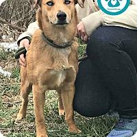 Adopt A Pet :: Camo - Kimberton, PA