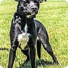 Adopt A Pet :: Harlee