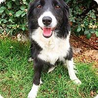 Adopt A Pet :: Dakota - Fredericksburg, TX