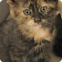 Adopt A Pet :: Leena - Des Moines, IA