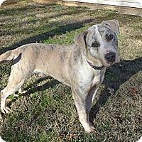 Adopt A Pet :: Herky - Mocksville, NC