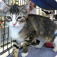 Adopt A Pet :: Francesca - Riverhead, NY