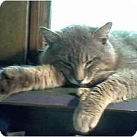 Adopt A Pet :: Horatio - Portland, ME