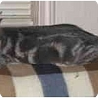 Adopt A Pet :: Jamie - Norwich, NY