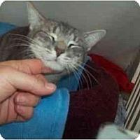 Adopt A Pet :: SILVERADO - Little Neck, NY