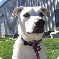Adopt A Pet :: Lilly - Meridian, ID