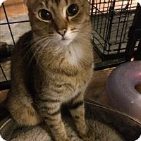 Adopt A Pet :: Joanna - Tracy, CA
