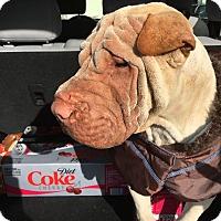 Adopt A Pet :: Mason - pending - Mira Loma, CA