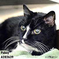 Adopt A Pet :: POKEY - Conroe, TX