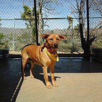 Adopt A Pet :: Lucky Lady - Cherry Valley, CA