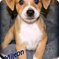 Adopt A Pet :: Milton~adopted! - Glastonbury, CT