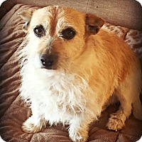 Adopt A Pet :: Patches - Tijeras, NM