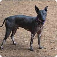 Adopt A Pet :: Logan - Phoenix, AZ