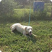 Adopt A Pet :: Annie - Monroe, GA