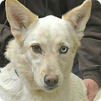 Adopt A Pet :: Savannah - white settlment, TX
