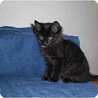 Adopt A Pet :: Gonzo - Lombard, IL