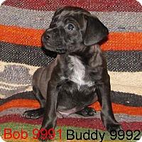 Adopt A Pet :: Bob - Greencastle, NC
