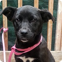 Adopt A Pet :: Arden*ADOPTED!* - Chicago, IL