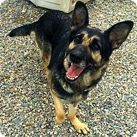 Adopt A Pet :: Mula - Libby, MT