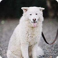 Adopt A Pet :: Sunny - Portland, OR