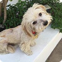 Adopt A Pet :: ZAKI - Los Angeles, CA