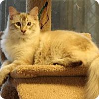 Adopt A Pet :: Constantine - Morgan Hill, CA