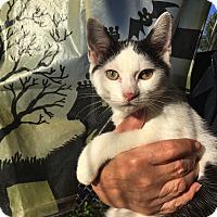 Adopt A Pet :: Finn - Baltimore, MD