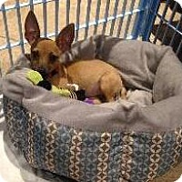 Adopt A Pet :: Princess Peanut - Richardson, TX