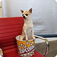 Adopt A Pet :: Slurpee - Seattle, WA