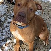 Adopt A Pet :: Uriah - Voorhees, NJ