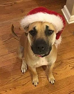 Shepherd (Unknown Type) Mix Dog for adoption in Rockaway, New Jersey - XP Coco or Nellie