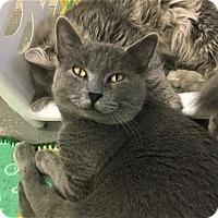 Adopt A Pet :: Bo - Greenwood, SC