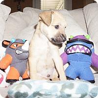 Adopt A Pet :: Bran - Austin, TX