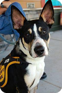 Border Collie/Shepherd (Unknown Type) Mix Dog for adoption in Baton Rouge, Louisiana - Clint