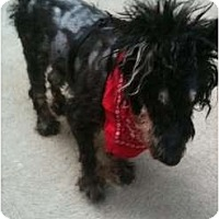 Adopt A Pet :: Troeg - Madison, WI