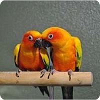 Adopt A Pet :: Cali & Addie - Redlands, CA