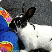 Adopt A Pet :: Morgan - Newport, DE