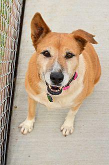 German Shepherd Dog Mix Dog for adoption in Acton, California - Gracie